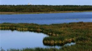 Vy över Gammelstadsviken som är en av landets rikaste fågelsjöar.